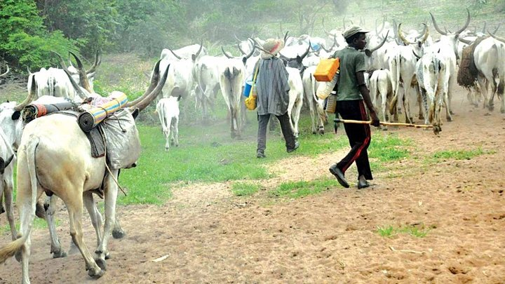 Thunder chases Fulani cow men away from Delta … Kills 12 cows on the spot